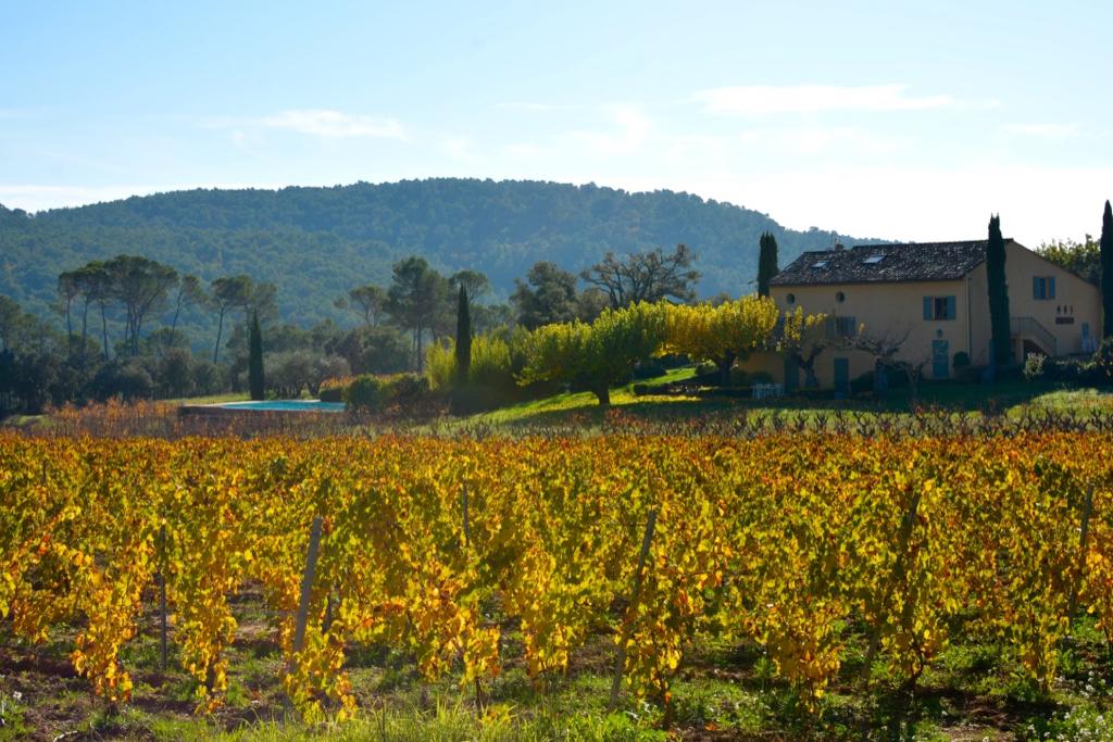 Provence Rose Wine5