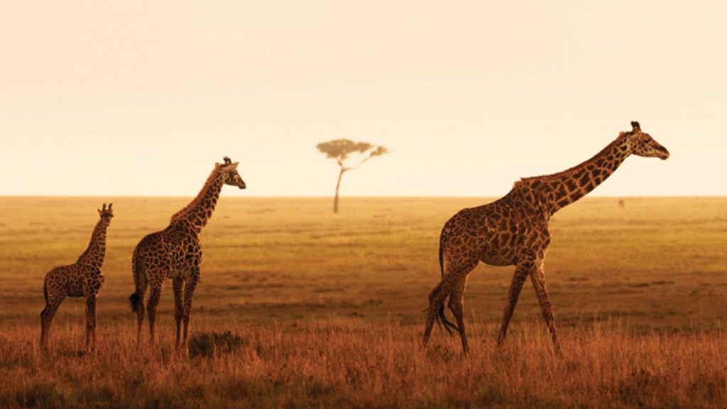 four seasons serengeti_5