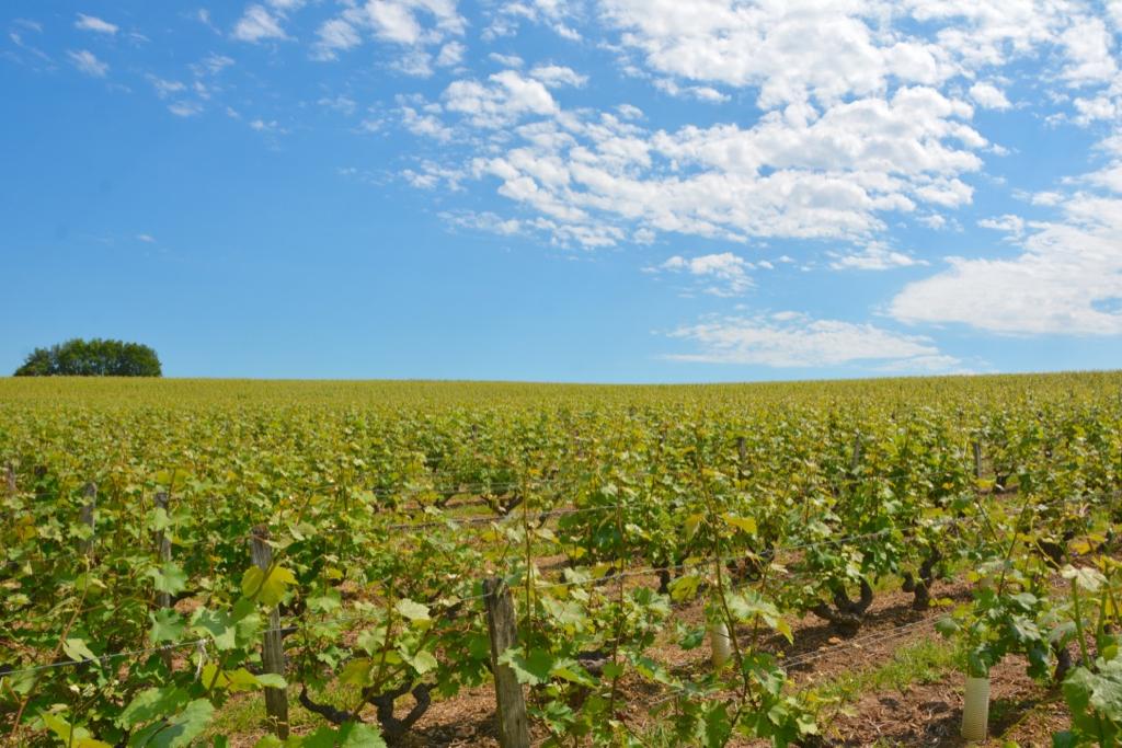 Loire Valley Wines_Leah Walker11