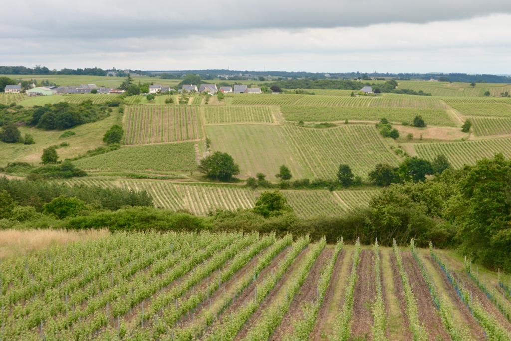 Loire Valley Wines_Leah Walker8