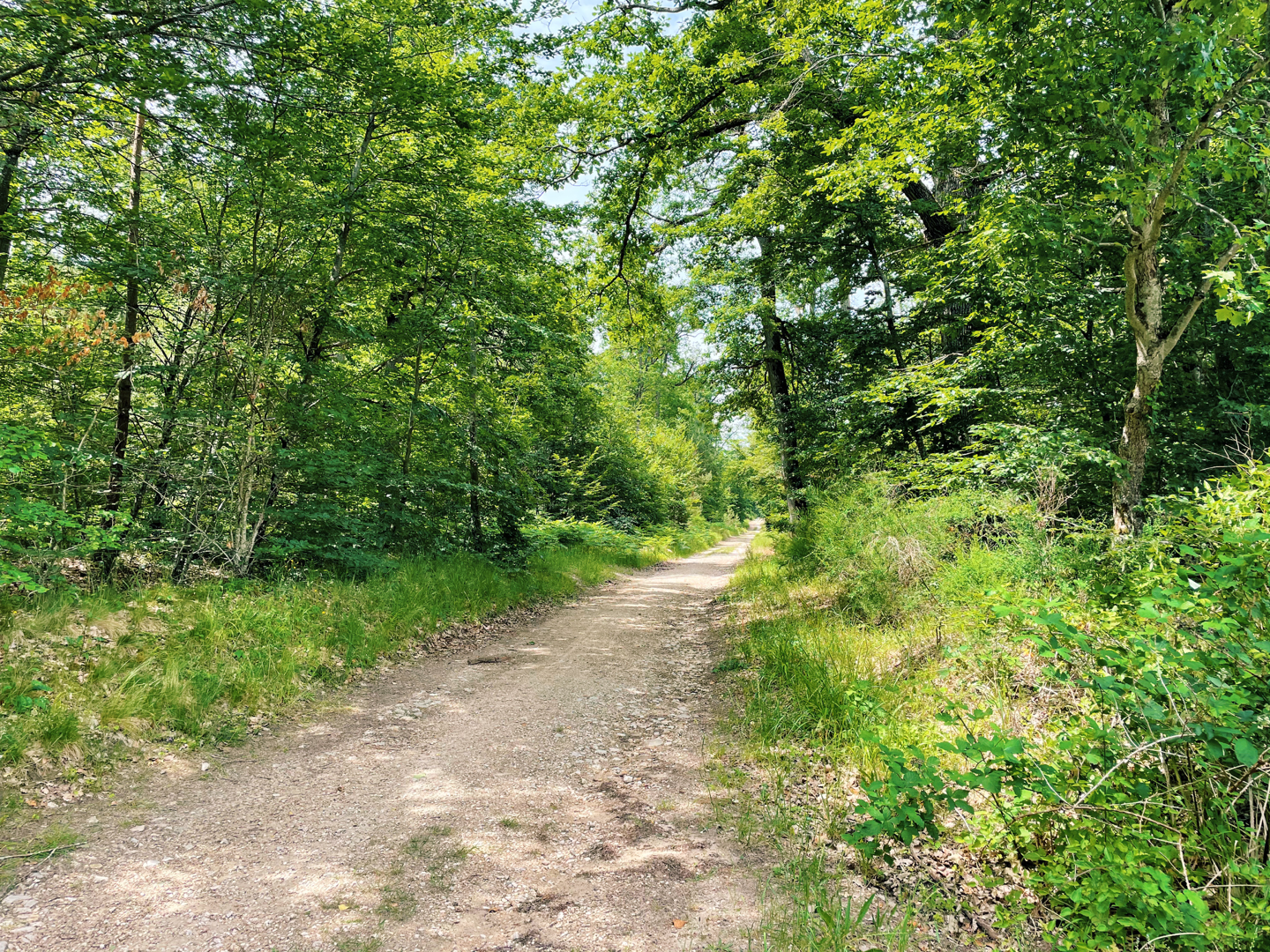 Fontainebleau Forest trail